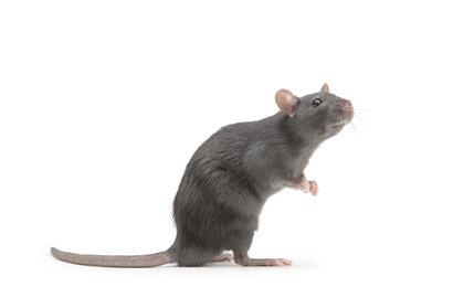 食品工場にてネズミ駆除、予防施工