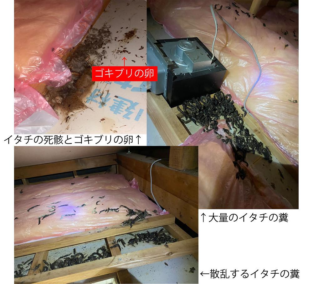 イタチの死骸、ゴキブリの卵、イタチの糞