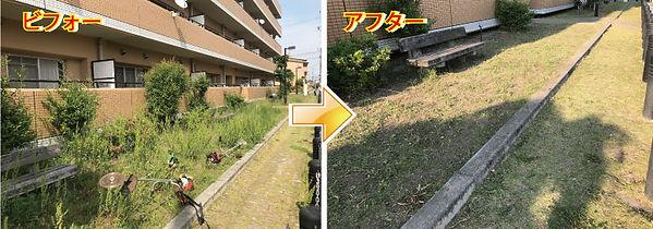 草刈り 2019-5-14-3.jpg