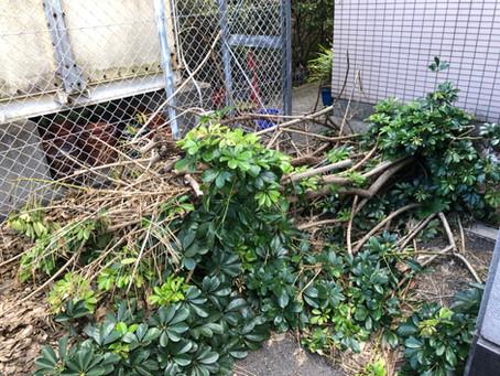 和歌山市にて草木の伐採処分