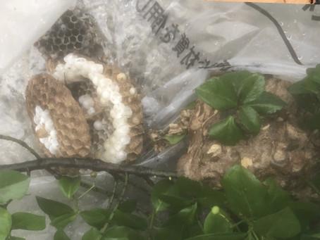 【有田市】スズメバチの巣を駆除しました。