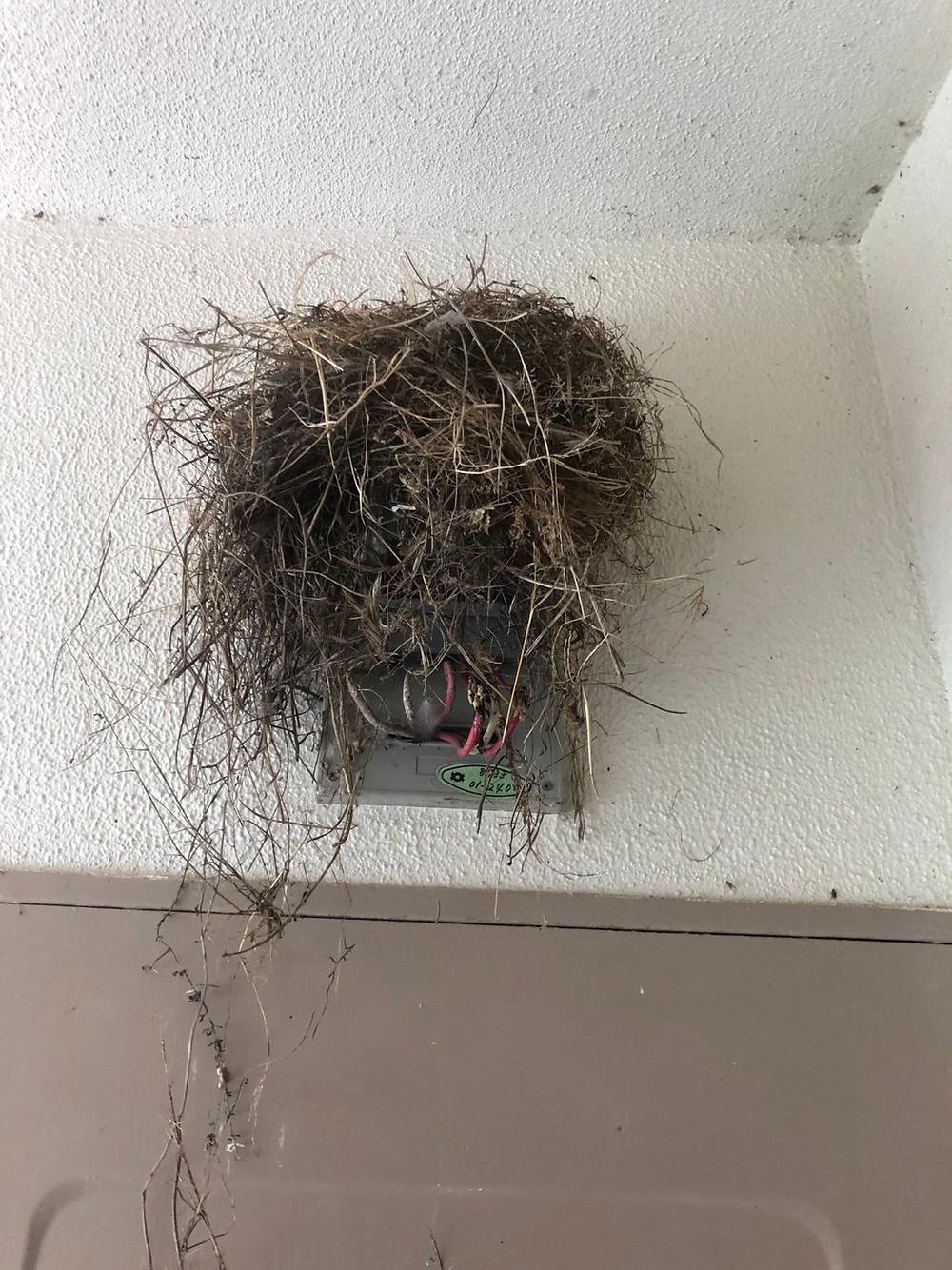 和歌山市、鳥の巣駆除、害獣駆除