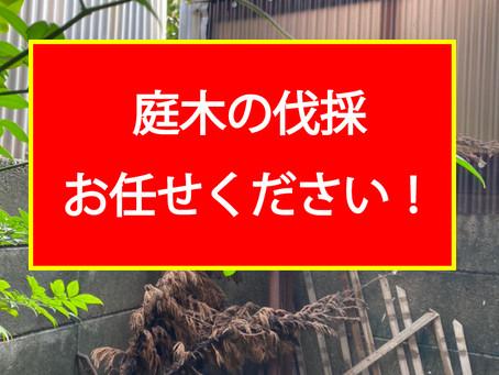 庭木の伐採、お任せください!