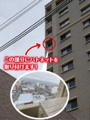 和歌山市 ハトネット取付.jpg