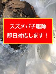 スズメバチ駆除.jpg