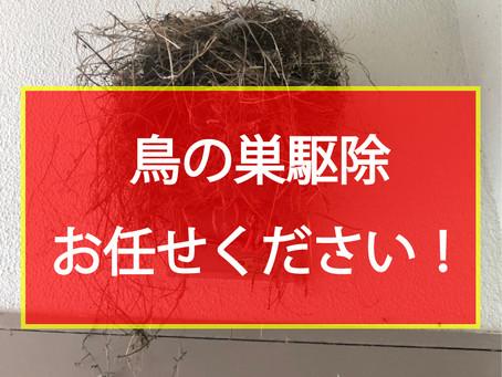 鳥の巣駆除 お任せください!