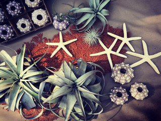 New Products | Starfish