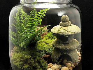 Plant Art   Zen Terrarium
