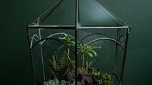 Plant Art | Cactus Terrarium