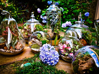 Terrariums by Bloom Designs
