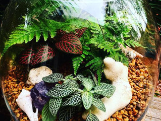 Terrariums by Bloom