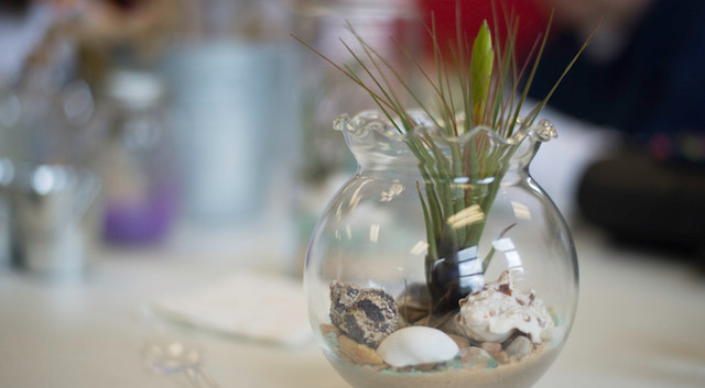 Airplant Terrarium Workshop