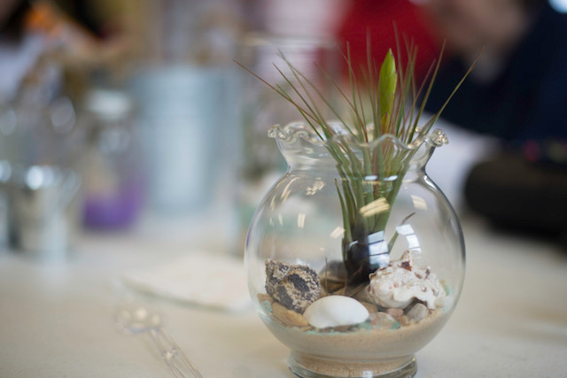 Airplant Terrarium Workshop