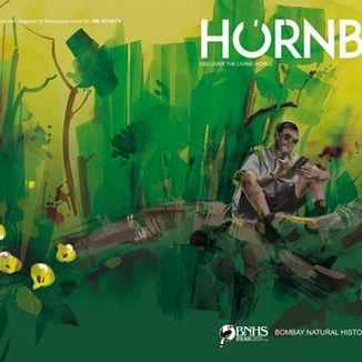 Hornbill - Wildlife Artist's