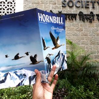 Hornbill - Central Asian Flyway