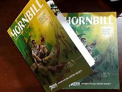 Hornbill - Wildlife Artists