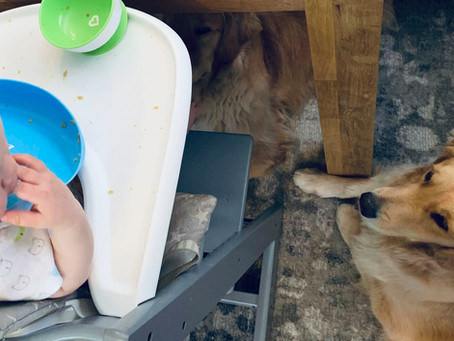 8 Ways to Handle the Mess When Babies Start Self Feeding