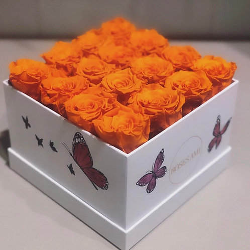 Amis Butterflies