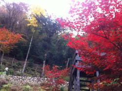Garden in Japanese autumn