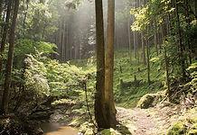trekking pass to Takimata waterfall