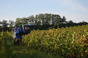 Vendange vigne mécanique