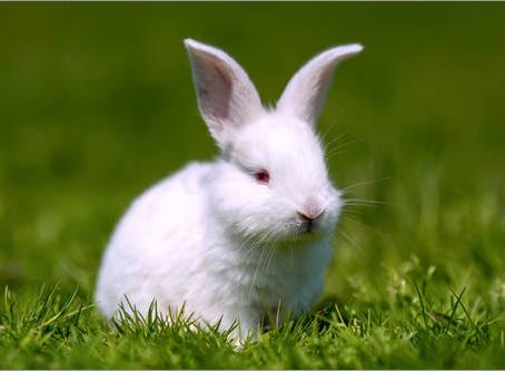l'art de Suivre le lapin blanc !