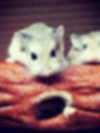 8-Einstein and Dexter-Cyndi Tobias.jpg