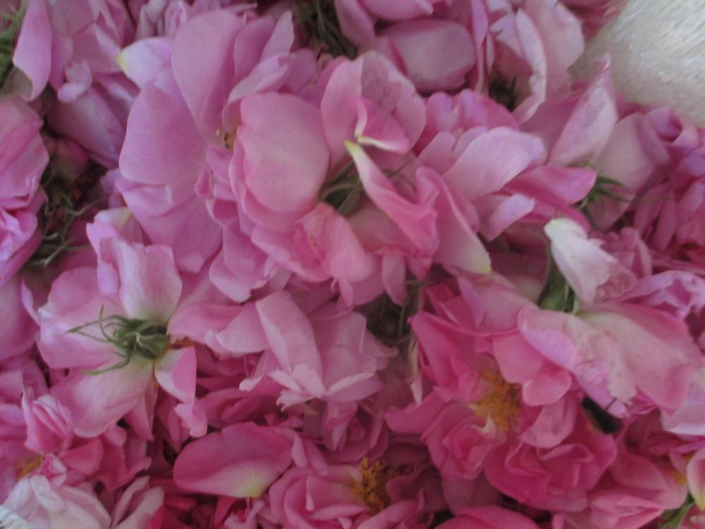full bag roses.JPG