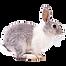 3-rabbit-png-image-thumb.png