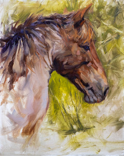 Salt-River-Mustang--