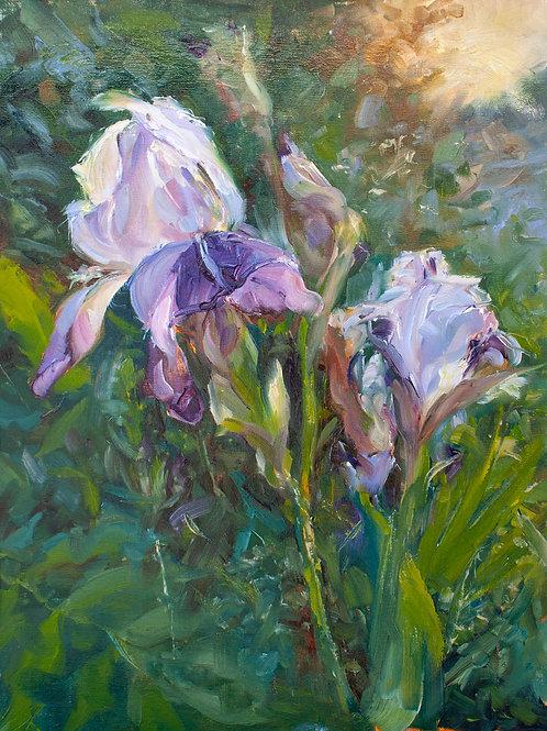 Morning Irises