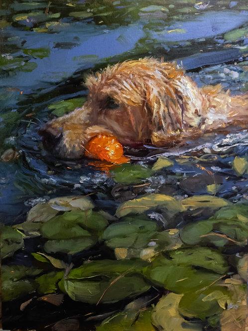 Atticus the Water Retriever