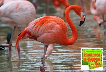 Flamingo Land Theme Park