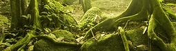 Naturerlebnis & Trommeln