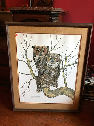 Framed Print of Great Horned Owl by Richard Evans Younger