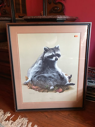Framed Print of Raccoon by Charles Frace