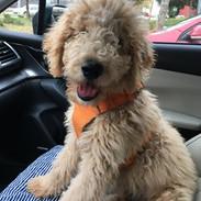 Homeward+bound+after+puppy+class.jpg