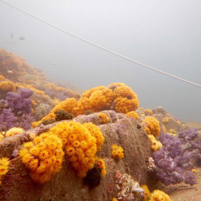 DIVING Victor Rock and one Foot Rock 20160828 (9)