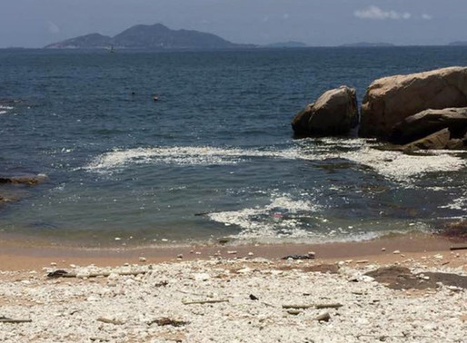 Hong Kong beaches closed after palm oil spill