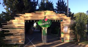 Broccoli Festival 2017