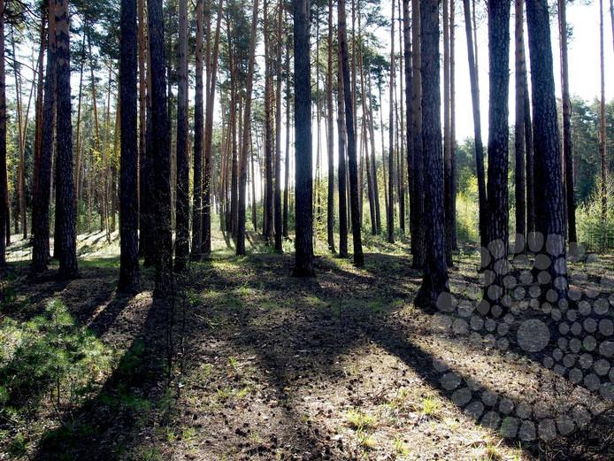 9 мая занятие по тенсегрити пройдёт в Балатовском лесу
