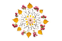 Flower Mandala.jpeg