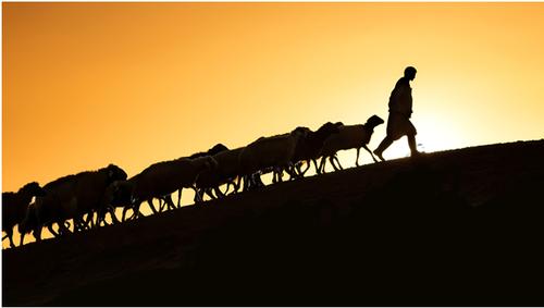 Shepherding the Flock