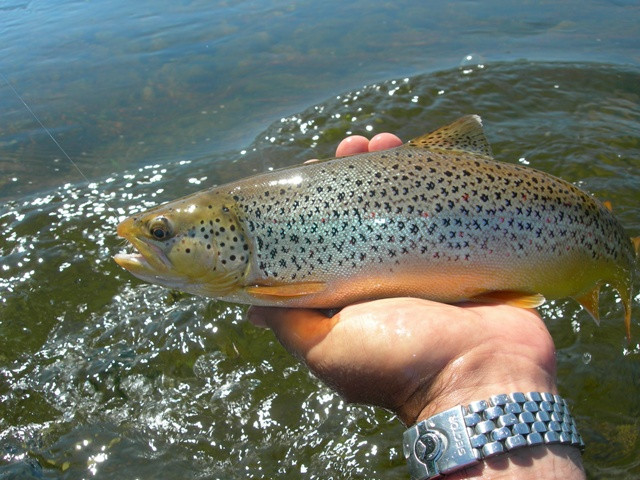 Wood River, Rhode Island Fly Fishing Guide Ed Lombardo