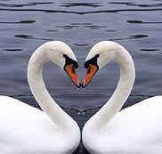 heartworks lomi