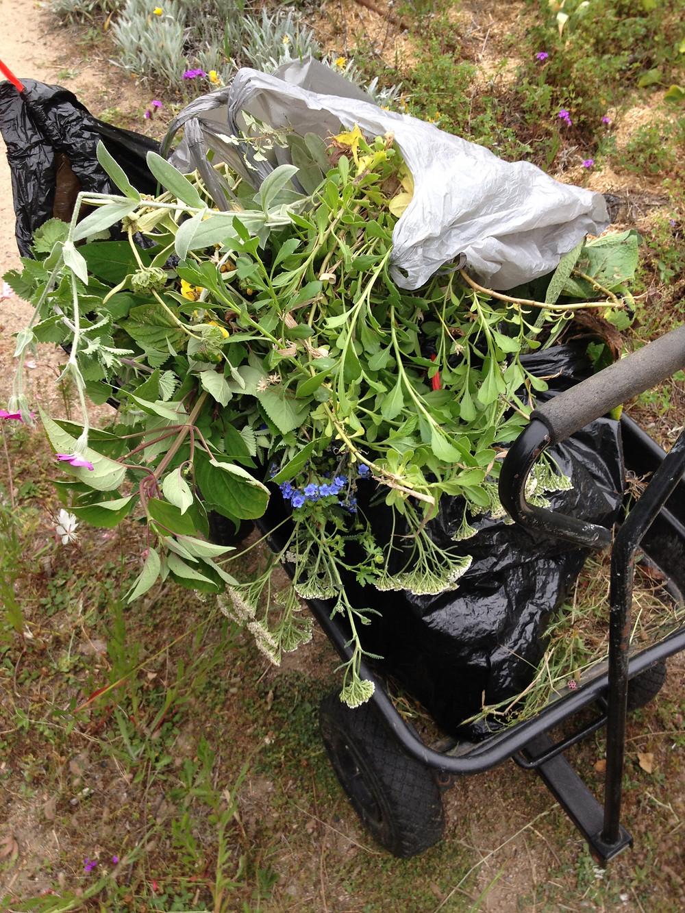Wheelbarrow full of plant bits