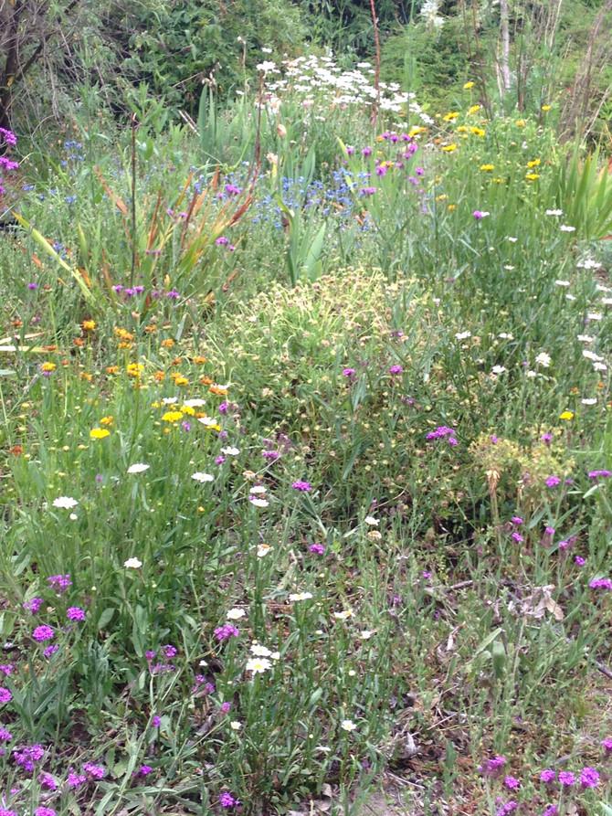 In Julie's Garden