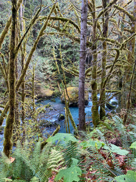 Mossy river hike on the Olympic Peninsula