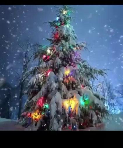 Livigno albero di Natale