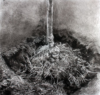 Zuzanna+Salamon_Roots_charcoal+on+paper_